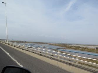 Rice Fields in Portugal