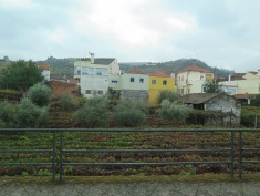 The vines grow right between the houses, Douro Valley