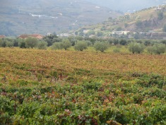 View of the Douro vineyards