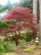 Beautiful gardens at Inchmarlo