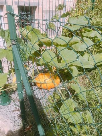 random pic of veg growing in Terrasson-Lavilledieu.