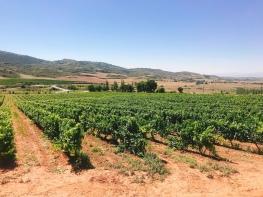 Villamayor de Monjardín, Spain