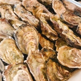 freshly shucked oysters in Gorey bay
