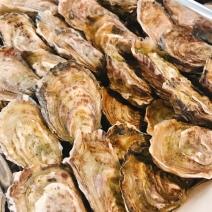 freshly shucked oysters in Gorey bay